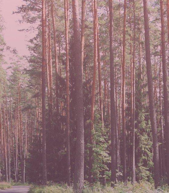 Para quem é indicada a <strong>Geração de Energia por Biomassa Florestal?</strong>