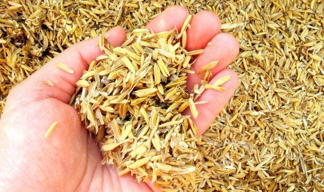 Como gerar energia a partir da casca de arroz